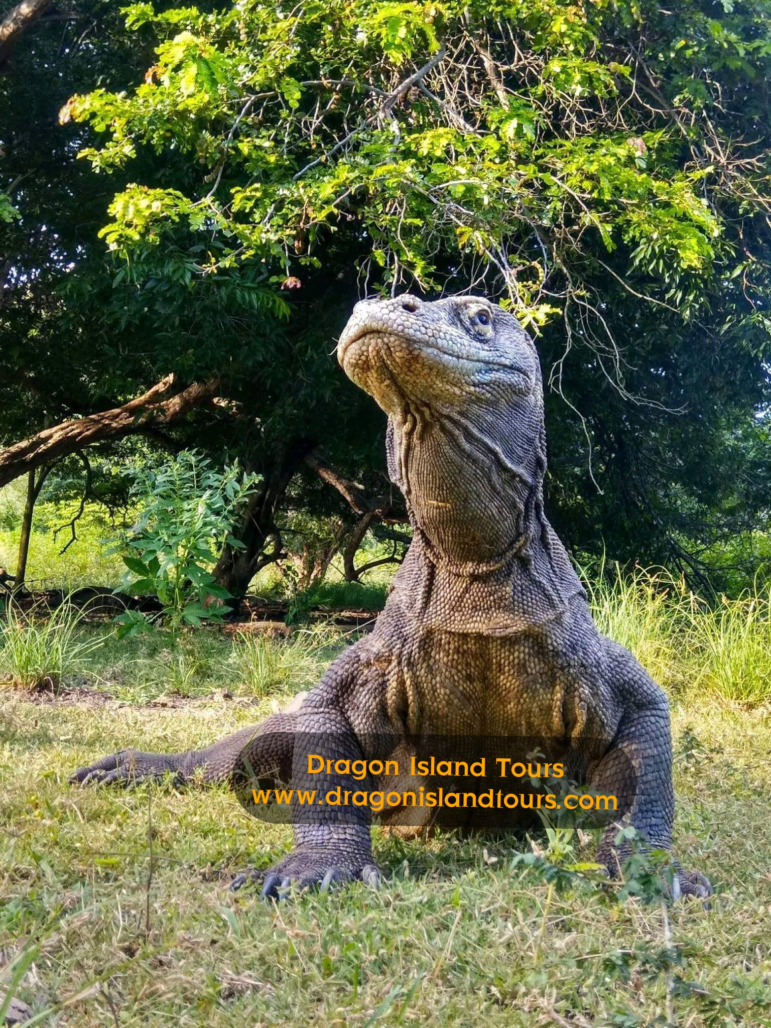 Komodo Rinca Island Tours 2 Dyas / 1Night